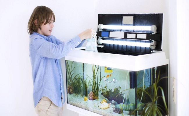 Decorar el hogar con acuarios marinos
