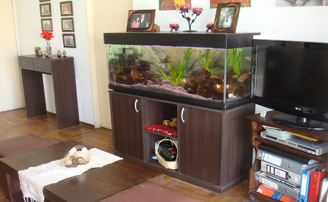 Acuario tropical para peces Goldfish
