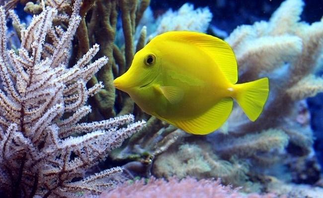 Feng Shui de un acuario