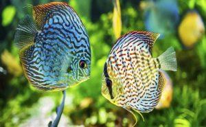 peces en el acuario