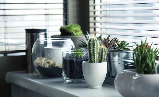Decoración interior con plantas