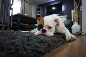 Casa limpia si tienes mascotas
