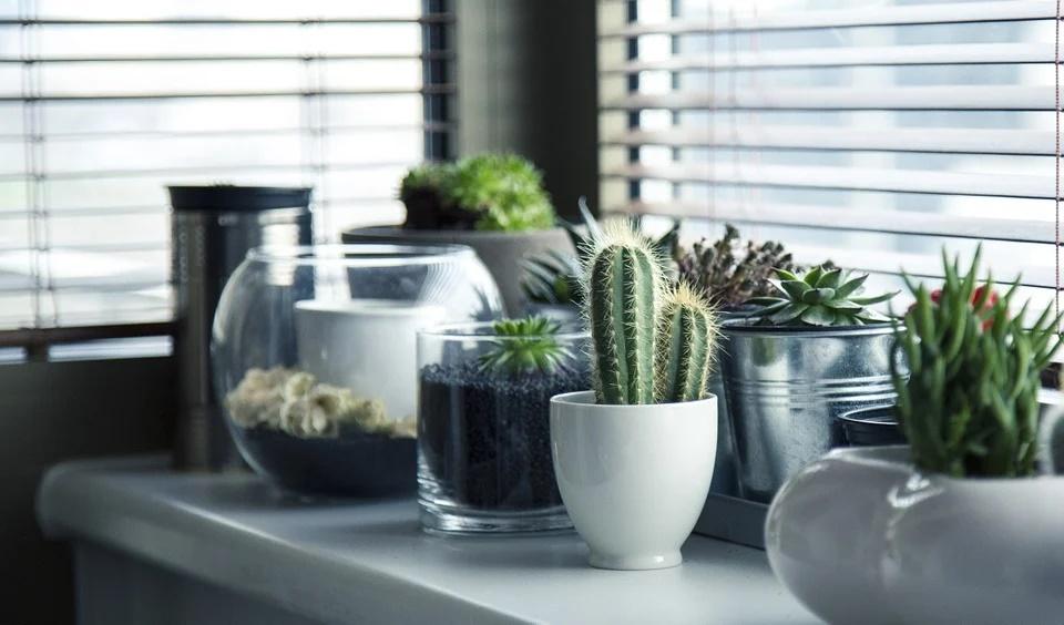 Plantas decorativas 0