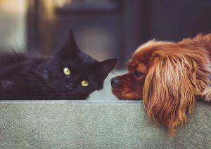 cuidar las mascotas durante el coronavirus.