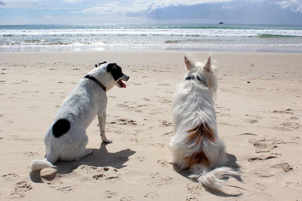 cuidado mascotas verano
