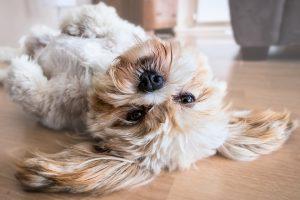cuidar a sus mascotas cuarentena